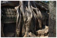 Angkor91